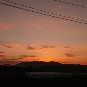 エノコログサと今朝の空など(今朝の新聞配達)