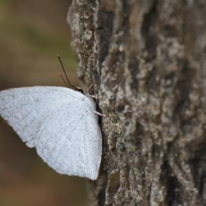 2019_10_03@森林公園植物園:活発に動いていた虫たち