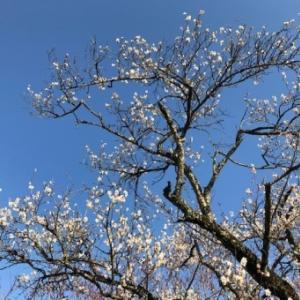 春めいて・・・