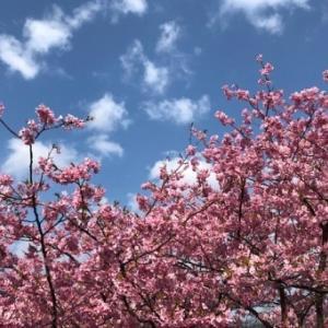 河津桜と滝めぐり