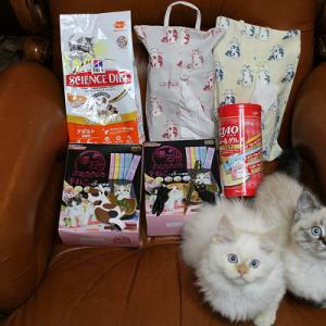 仔猫へのX'masプレゼント