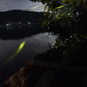 憧れの湖畔キャンプ③蛍撮影に挑戦!〜青木荘キャンプ場〜
