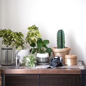 観葉植物をプラスして爽やかインテリア