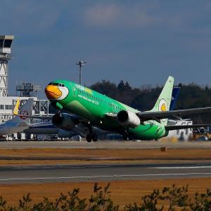 緑の鳥さん飛翔 Vol.1