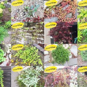 我が家の植物図鑑~宿根草と果樹のある暮らし~