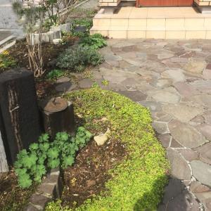 戸建ての庭には「宿根草」の花壇がおすすめ