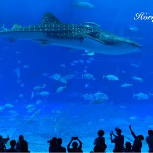 おさかないっぱい。人もいっぱい。美ら海水族館! @沖縄