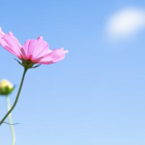 全ては1パーセントの積み重ね、どうせ生きるなら幸せになろう!。