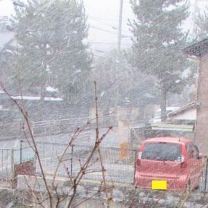 今日の雪すごかったですね!