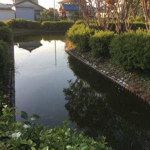 浅野城 〜水路〜