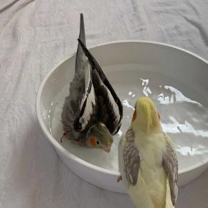 ひまわり初めての水浴び