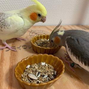 鳥達にいびきは慣れるのか