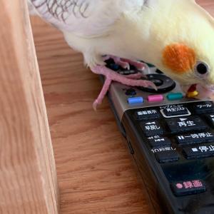 小鳥のうた練習中