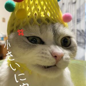 猫の被り物3