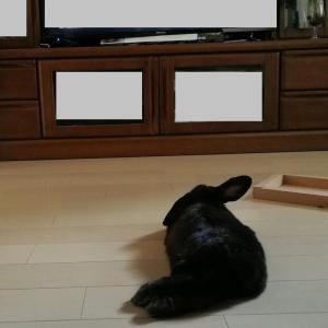 TV前でくつろぐ