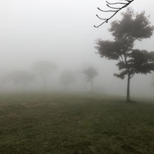 初日は濃霧……