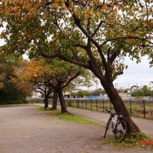 2019 昭和記念公園の紅葉(その1)