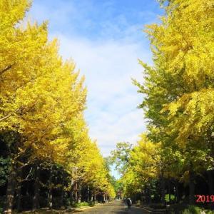 今日は黄色三昧!!(昭和の森イチョウ並木~昭和記念公園)