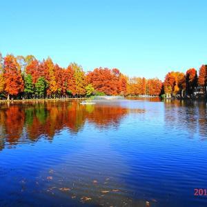 「メタセコイア」の別所沼公園へ