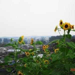 狭山丘陵をポタる(2020.7.22)