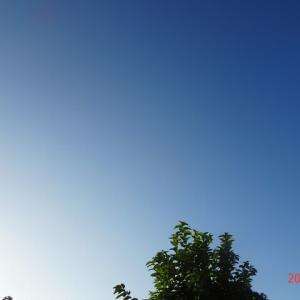 こんな時は昭和記念公園(2020/09/08)
