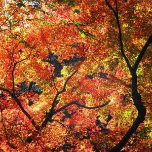 平林寺の紅葉(2020/11/28)