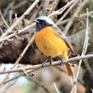 鳥見散歩(2021/01/17)