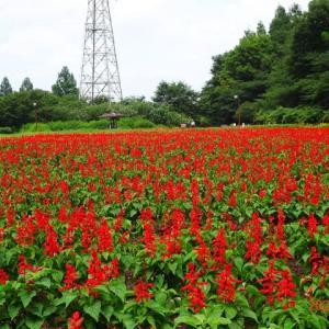 伊佐沼~花の丘農林公苑(2021/07/11)
