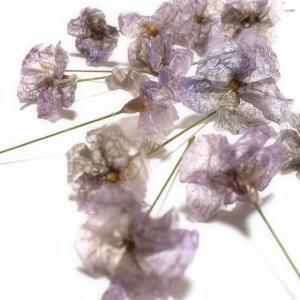 ワックスペーパーのお花増えました♩