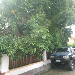 マンゴーの木の下に車を停めるべからず