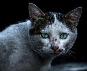 貧乏人がペットを無責任に飼うのは虐待! 猫80匹と暮らす地獄のような家を見て考える