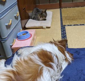 おらのご飯を食べられないように 寝転んで見張りだワン!