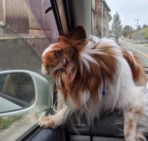 今日はホームセンターにお買い物 グリさんは車に乗れて上機嫌です^^