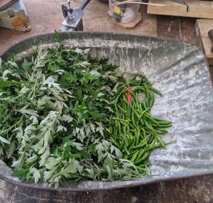 今年2回目のヨモギと青胡椒の収穫
