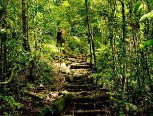 【世界遺産】シンハラジャ森林保護区
