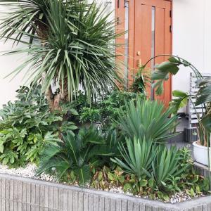 植物の生命力!コロナ鬱にぴったりなヒーリング効果