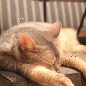 【簡単更新】寝惚ける猫