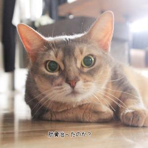 尻尾を挟む猫