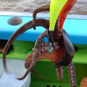 【釣】叩きまくってエギとマダコを交換する (2020/08/01 マダコ 一之瀬丸)
