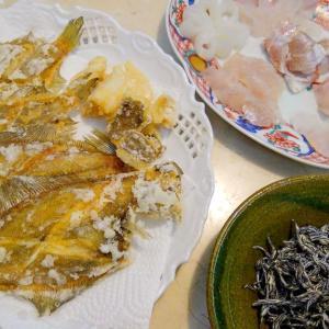 【食】アマダイの昆布〆・ゲストの刺身・ムシガレイの唐揚げ、干物