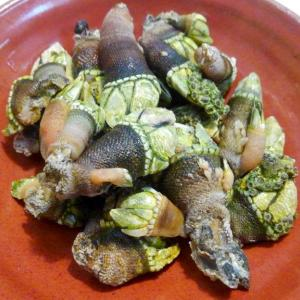 【食】カメノテの塩茹でを食す
