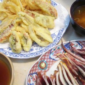 【食】シロギスとホウボウの天ぷら・ホウボウの刺身