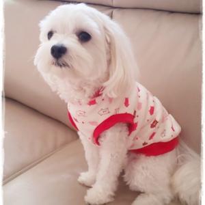 愛犬に可愛いニット服を作ってみた