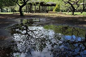 雨上がり 色づきかけた砧公園 工程