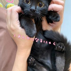 お茶シリーズ黒猫ヘルシア緑茶☆ずっとのおうちが出来ました♡