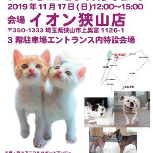 17日 イオン狭山店様にて譲渡会開催です☆