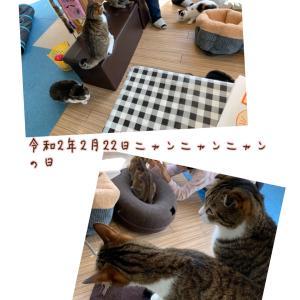 令和2年2月22日 猫の日特別イベント大盛況✨ありがとうございました♡大部屋も綺麗になりました!