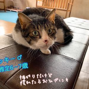 リモート譲渡会 ~にゃんこさんご紹介~