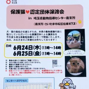 保護猫譲渡会@埼玉県動物指導センターにて