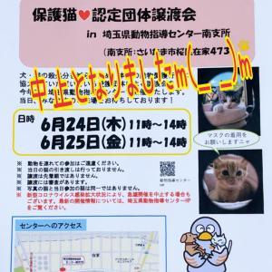 埼玉県動物指導センター 南支所にて開催予定だった保護猫譲渡会中止のお知らせ